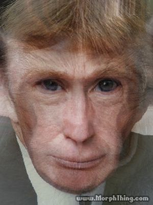 Picture Morph Baby on Monkey And Donald Trump  Morphed    Morphthing Com